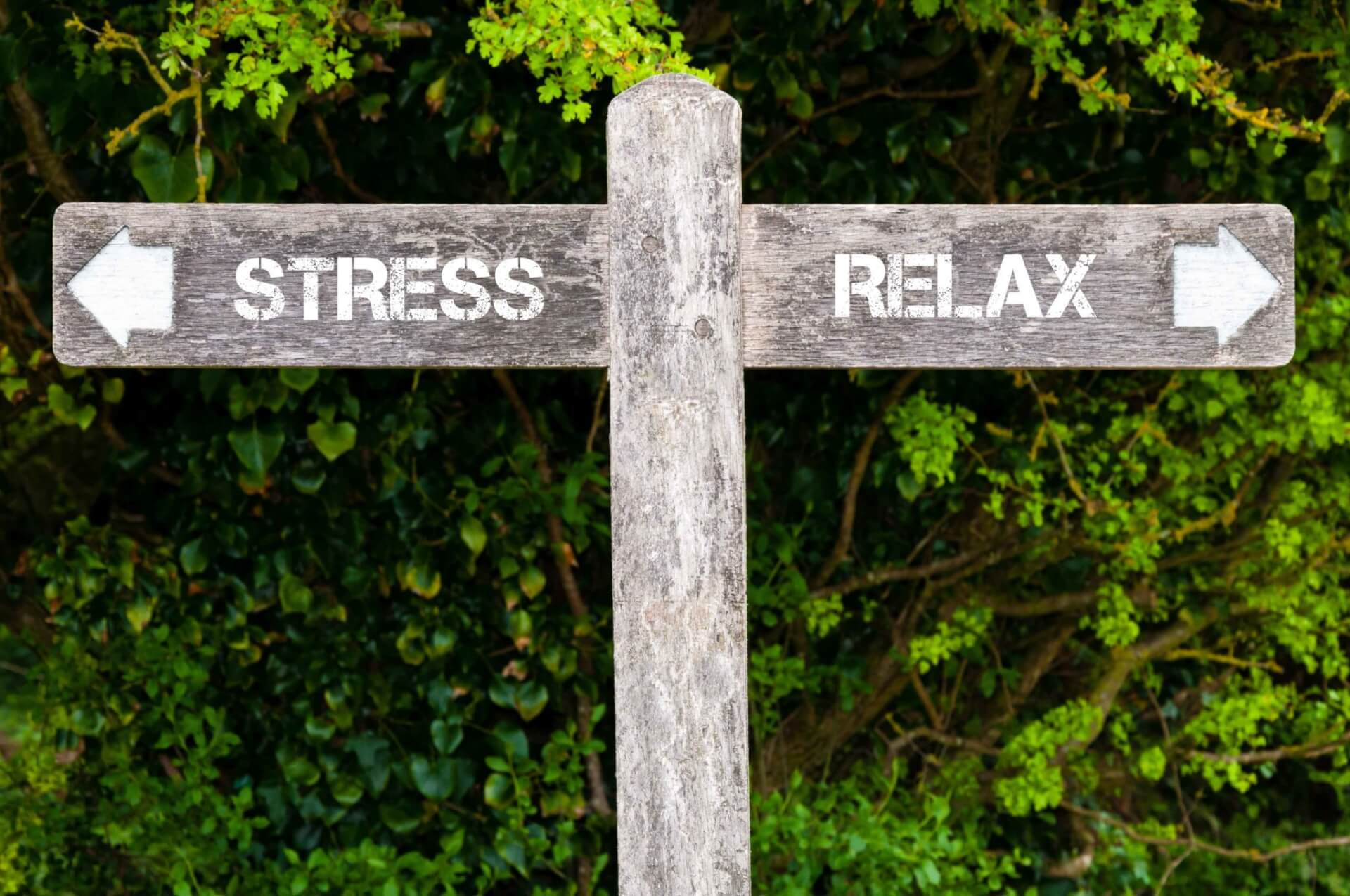 Meditation and Stress Reduction