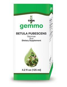 Betula Pubescens Bud by Unda