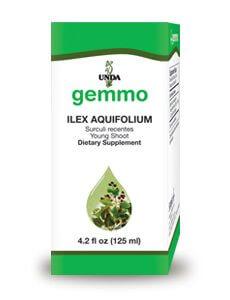 Ilex Aquifolium by Unda