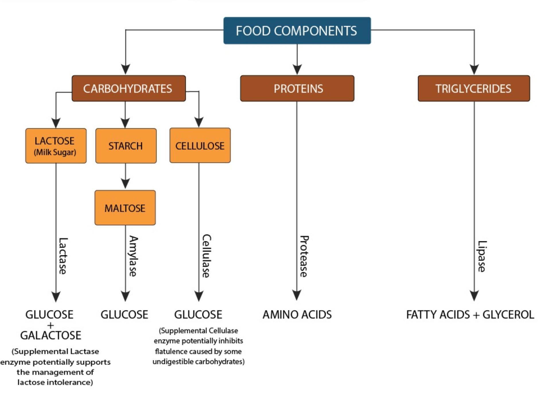 Digestive Enzyme Details
