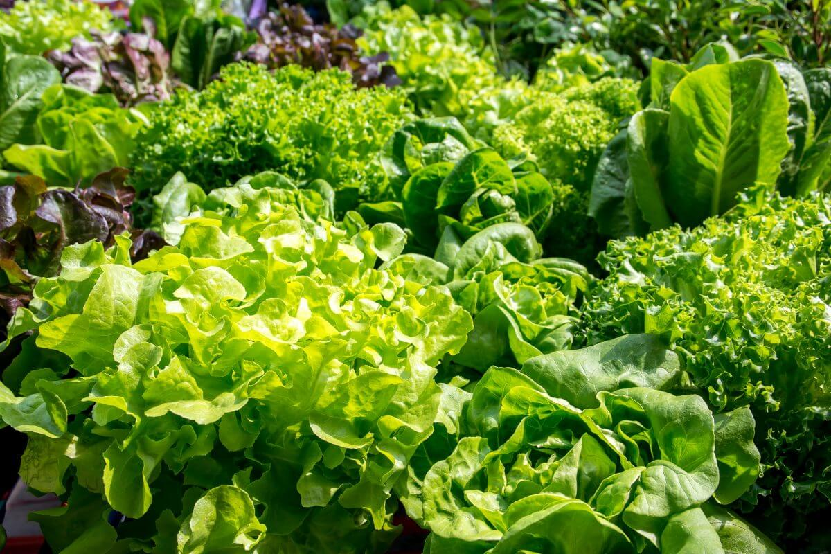 Don't Like Leafy Greens? The Good Bacteria in Your Gut Do